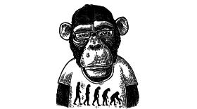 Photo d'un singe pour illustrer cet article sur la Planete des signes ou l'obsession de l'agilité